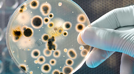 Strange Facts About Biofilm