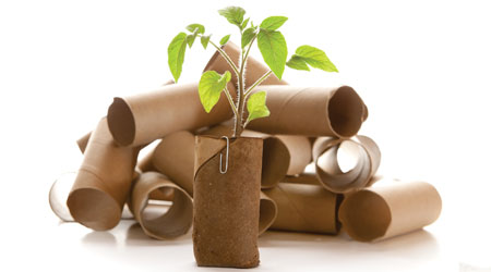 toilet paper rolls with green plant growing to indicate sustainability