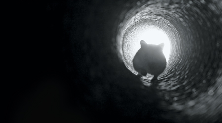 mouce running toward an open hole in shaddow