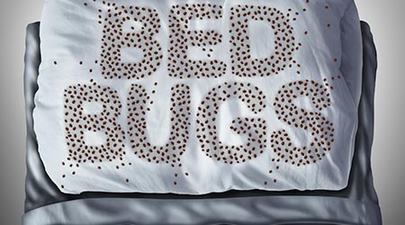 Bed bug on pillow and in bed as a bedbug infestation concept shaped as text letters as parasitic insect pests under the sheets as a hygiene health care symbol