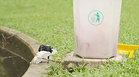 Crow holding paper in its mouth standing next to garbage bin in the green outdoor park