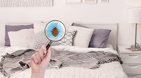 Magnifying Glass Detecting Bug