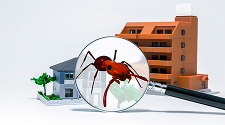 Pest control of residence concept