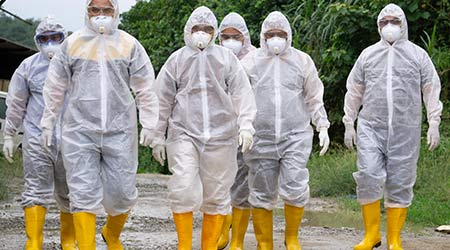 Veterinary worker wearing personal protection equipment (PPE) during avian influenza (bird flu) checking on chicken barn in Tuaran Sabah