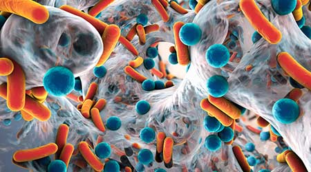 Biofilm of antibiotic resistant bacteria, closeup view
