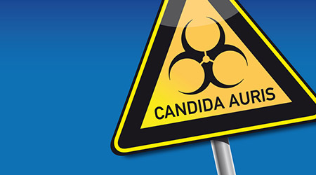 information sign with candida auris typed and biohazard symbol
