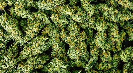 A pile of weed