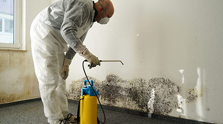 Specialist treating mold