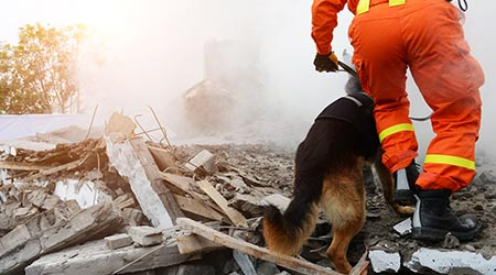 Search and rescue forces search through a destroyed building with the help of rescue dogs