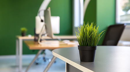 Green office interior with a small plant on front and a computer in an out of focus background