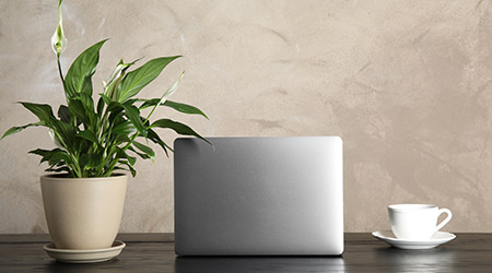 Spathiphyllum plant, laptop and cup on table against color background.