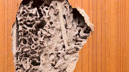 The wood door with termites damage