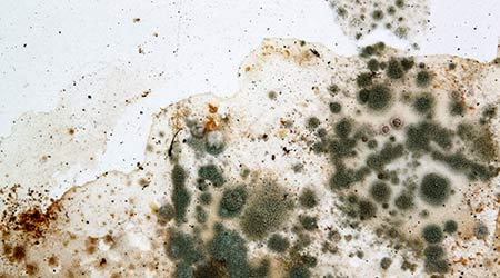 Mold on white background, fungus on white background, bacteria on white surface, Mold growth on white surface