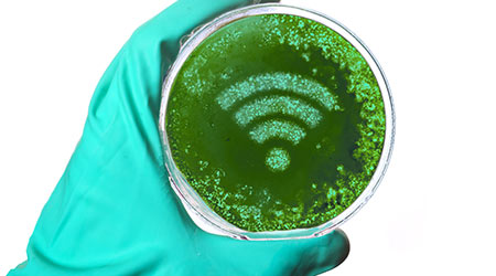 A scientist holding a petri dish with germs in the shape of a WiFi symbol.(series)