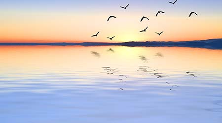 Birds flying over a calm body of water