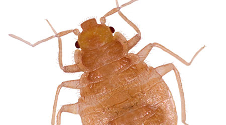 Bed Bugs Found At Second DC Elementary School