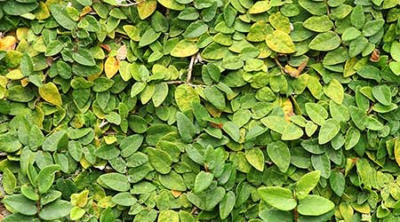 Cleaning An Artificial Green Wall