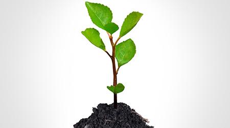 Tips To Become More Environmentally Responsible